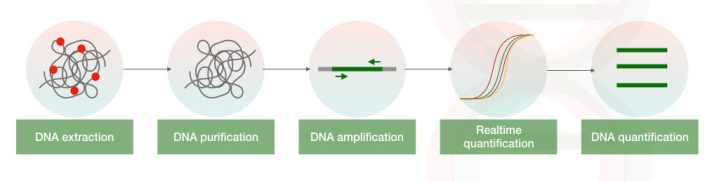 The illustration of DNA quantification starting from DNA extraction.