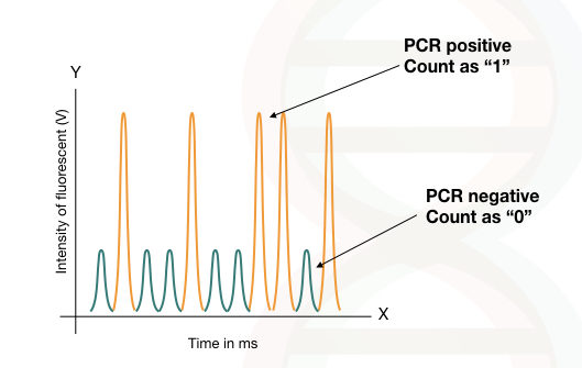 The graphical illustration of the output of digital PCR.