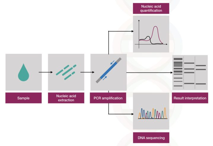 The process of DNA testing