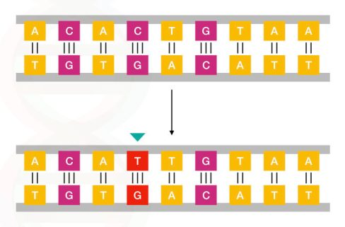 The simple example of point mutation.