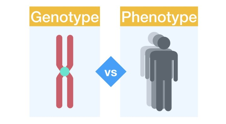 Differences between genotype and phenotype