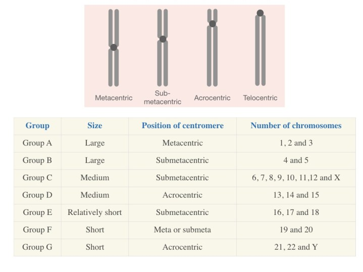 The chart of various categories of human chromosomes based on their centromere location.