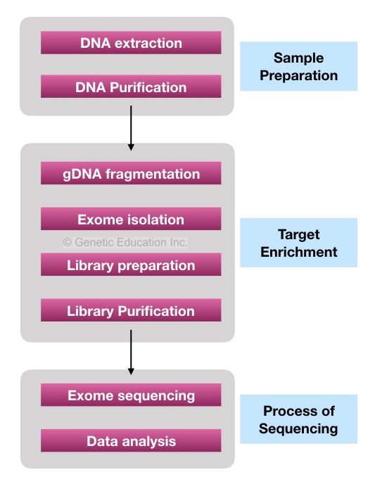 The flow-chart of the process of Whole exome sequencing.