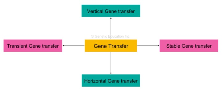 Four different types of gene transfer techniques