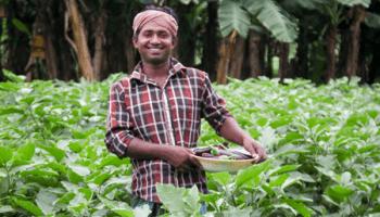 Why Bangladesh's GMO eggplant success angers anti-GMO activists