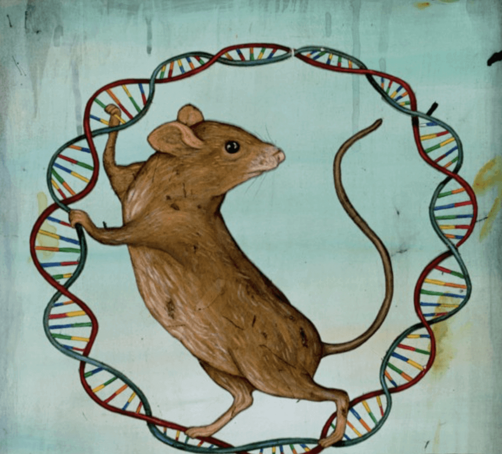Synthetic conservation  Gene drives could revive extinct animals     Scientists working in co    rdination with a U S  conservation group say  they ve established an evolution warping technology called a    gene drive     in mammals