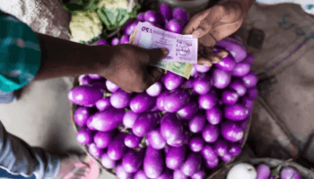 Insect-resistant Bt GMO eggplant helps Bangladesh farmers increase income, reduce pesticide use