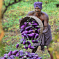 Bt eggplant, Bangladesh's first GMO crop, controls 'vicious' fruit and shoot borer pest, boosts farmer profit sixfold