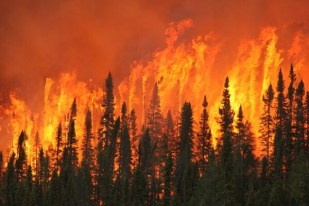 Image result for forest fire