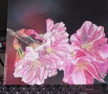 Cherry Blossoms - Fabriano accademia - Spectrum Noir Pencils - airbrushed backgroud