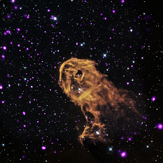 X-ray, Optical & Infrared Images of IC 1396A When radiation and winds from massive young stars impact clouds of cool gas, they can trigger new generations of stars to form. This is what may be happening in this object known as the Elephant Trunk Nebula (or its official name of IC 1396A). X-rays from Chandra (purple) have been combined with optical (red, green, and blue) and infrared (orange and cyan) to give a more complete picture of this source.  (Credit: X-ray: NASA/CXC/PSU/Getman et al, Optical: DSS, Infrared: NASA/JPL-Caltech)