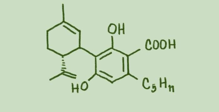 cannabidiol acid