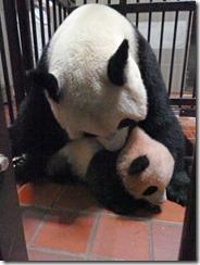 panda07