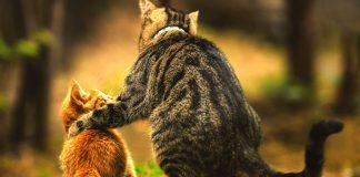 Gatti amici
