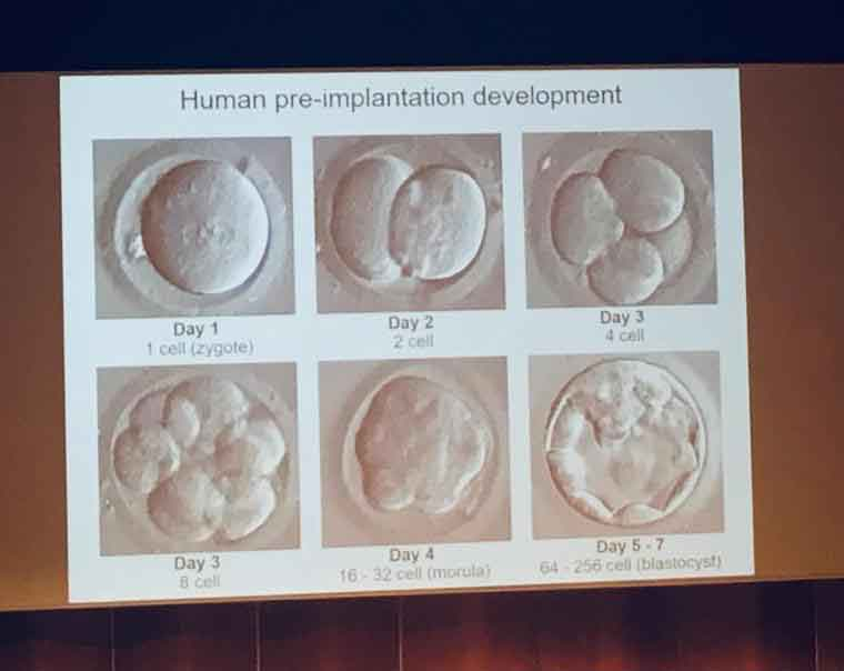 """Informed Consent"""" to edit embryos: what consent"""