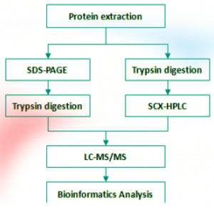 perfil-proteomica