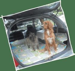 Il vero standard del maltese ti presento il cane