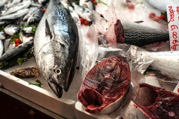 pesce mercato del pesce