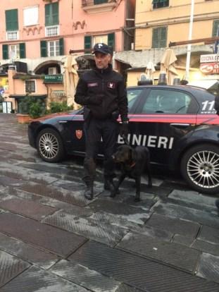 carabinieri cricamento cane joy unità cinofile