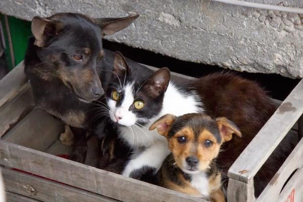 cani-gatti-abbandonati