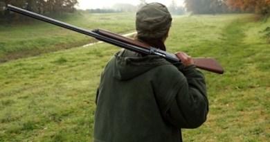 Cinghiali, l'assessore Mai punta a estendere la caccia di selezione