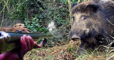 """Il governo impugna la legge regionale che prevede il ricorso a """"volontari- cacciatori"""" per il controllo della fauna selvatica"""