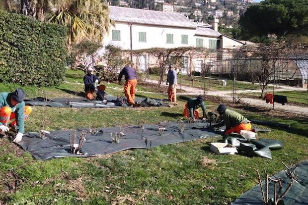 Il roseto di nervi si prepara a euroflora giardinieri for Giardinieri genova