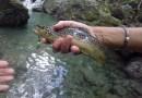 Parte domenica la stagione della pesca alla trota