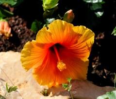 fiori (10)