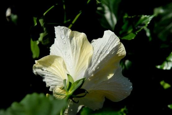 fiori (12)