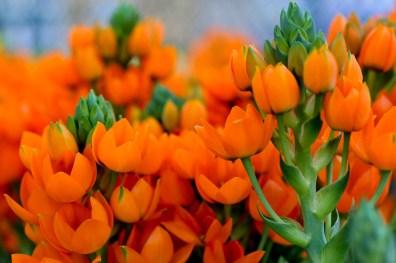fiori (23)