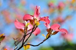fiori (48)