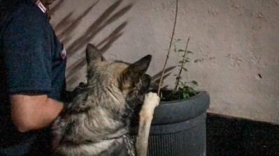 cane carabinieri bono
