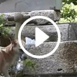 Fly, dopo quasi un mese catturata la cagnolina che ha fatto battere il cuore ai social