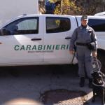 Carabinieri forestali bonificano i boschi da esche avvelenate contro i lupi