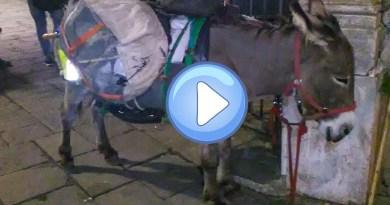 Il viandante che attraversa l'Europa con l'asino è arrivato in centro storico – FOTO E VIDEO