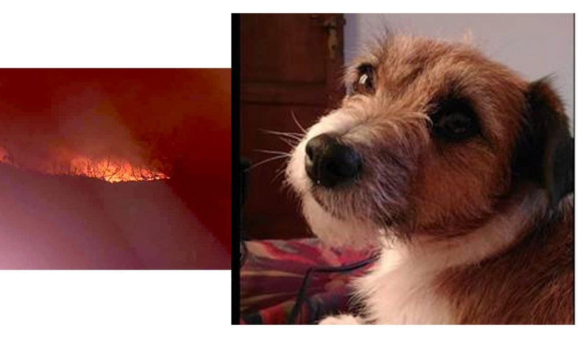 Animali in fuga dalle fiamme, si cerca ancora Daisy