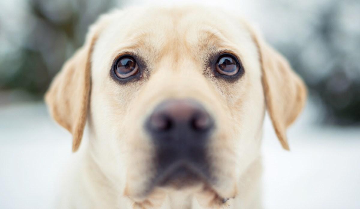 Bimba di 16 mesi azzannata al volto dal cane geloso
