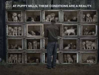 """""""Puppy Mills: Facts, Outlawing, What to do"""" article. Snowy Swan webpage."""