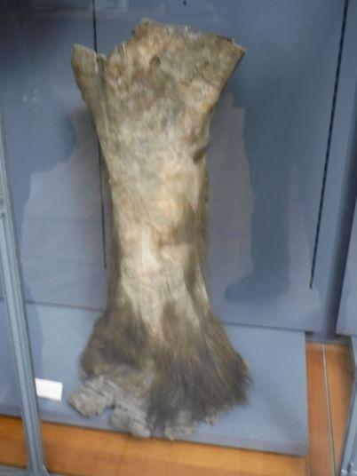PG.Paris.Natural History Museum024