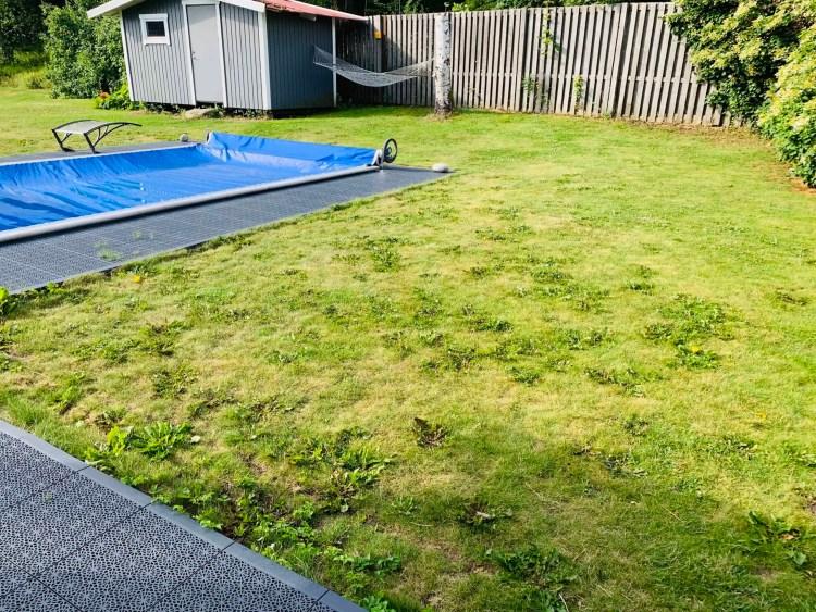 Ogräs i gräsmattan, Ogräsbekämpning, bli av med ogräs