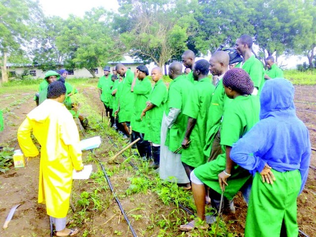 Lagos, Ogun partner to train 3,000 youths in agriculture