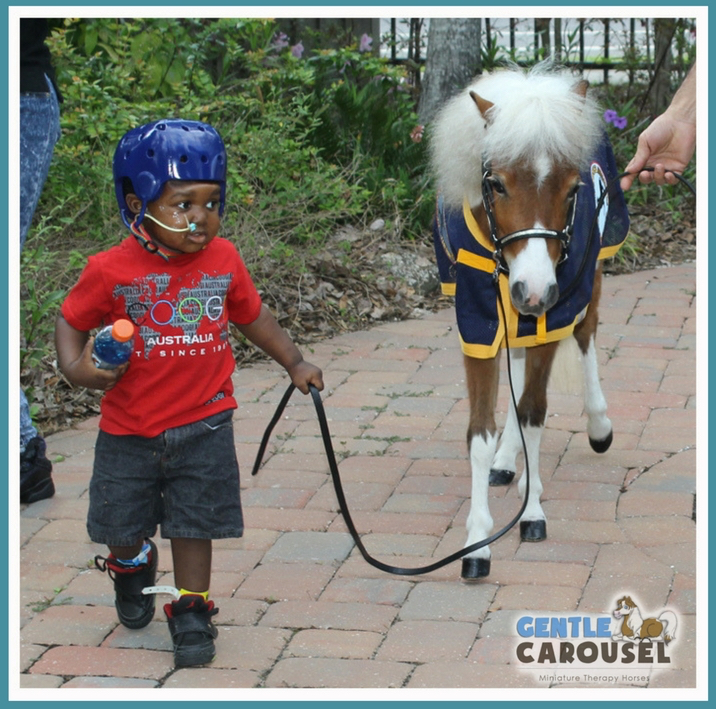 Things We Need Gentle Carousel Miniature Therapy Horses Equine Therapy