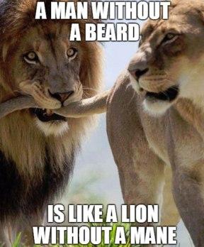 a-man-without-a-beard-is-like-a-lion-without-a-mane-beard-meme