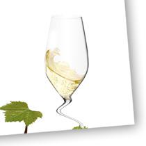 Gaillac vin blanc vignoble