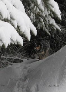 SnowMar112013 013a