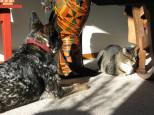 Sunbathing with cat.