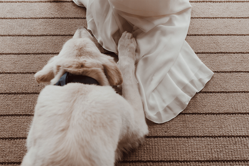 dog with bride's wedding dress train