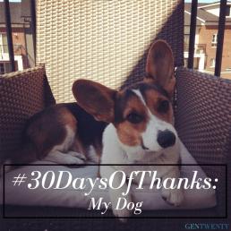 #30DaysOfThanks: My Dog
