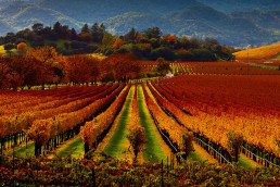 Seven Places to Visit in the USA During Autumn